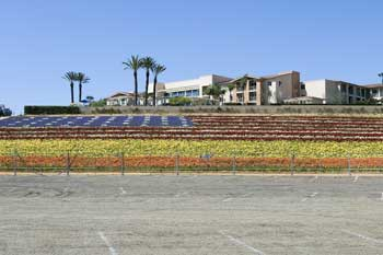 2241_Carlsbad_Flower_Fields