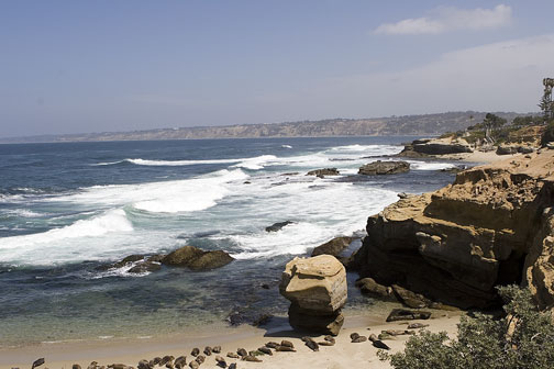 2260_Seals_Childrens_Beach_LaJolla