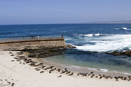 2261_Seals_Childrens_Beach_LaJolla